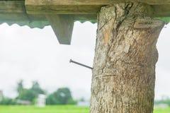 Stahlnagel auf Baumstamm stockfotografie
