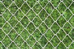 Stahlnetz auf grünem Gras. Stockfotografie