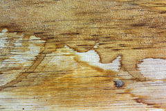 Stain coffee or tea against grunge wood texture Royalty Free Stock Photos