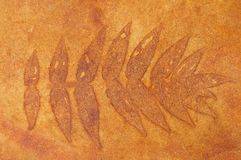 Stained Concrete Leaf Pattern Stock Photos