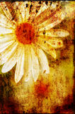Stained daisy. Macro shot of a daisy with textures applied stock photography