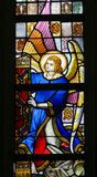 Stained Glass - Angel. Stained Glass window depicting an Angel in the Cathedral of Saint Bavo in Ghent, Flanders, Belgium royalty free stock photo