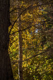 Stained glass autumn Royalty Free Stock Photography