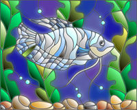 Stained glass illustration of aquarium fish on the background of the water and algae. Illustration in stained glass style with blue gourami on the background of Stock Photography