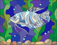 Stained glass illustration of aquarium fish. Illustration in stained glass style with blue gourami on the background of water and algae Stock Photos
