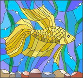 Stained glass illustration of an aquarium with yellow fish on water background and seaweed. Illustration in stained glass style with yellow fighting fish on the Royalty Free Stock Photography