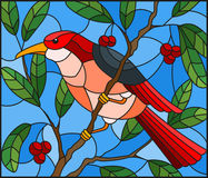 Stained glass illustration  with a beautiful red bird  on a  background of branch of tree and sky. Illustration in the style of stained glass with a beautiful Stock Photography