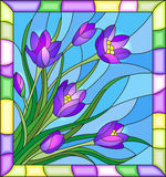 Stained glass illustration  with bouquet of crocuses  on a blue background in the frame Royalty Free Stock Images