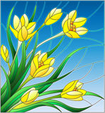 Stained glass illustration with bouquet of  yellow crocuses  on a sky background Stock Image