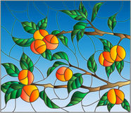 Stained glass illustration  with the branches of orange tree , the fruit branches and leaves against the sky Stock Photo