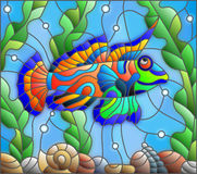 Stained glass illustration  mandarin fish on the background of water and algae. Illustration in stained glass style  mandarin fish on the background of water and Stock Photos