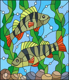 Stained glass illustration  with a pair of fish  perch  on the background of water and algae. Illustration in stained glass style with a pair of fish  perch Royalty Free Stock Photos