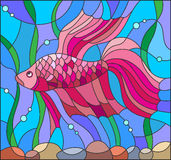 Stained glass illustration with a red fighting fish. Illustration in stained glass style with red fighting fish on the background of water and algae Royalty Free Stock Images