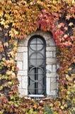 Stained-glass okno w ścianie zakrywającej bluszczem zdjęcia royalty free