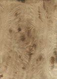 Stained old paper texture. Stained old paper with the coffee effect. Scanned with the High resolution royalty free stock images