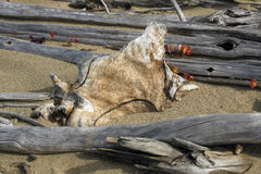 Stained, ornamental driftwood on the beach at Flagstaff Lake, Ma Royalty Free Stock Photos