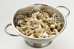 Stainless steel colander with fresh oyster mushrooms on the white kitchen table. Raw food ingredients ready to cooking Royalty Free Stock Photos