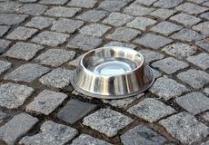 Stainless Steel Dog Bowl Stock Image