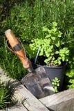 Stainless steel garden trowel in herb garden Royalty Free Stock Images