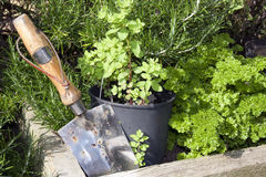 Stainless steel garden trowel Royalty Free Stock Photography