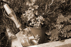 Stainless steel garden trowel in sepia Royalty Free Stock Photography