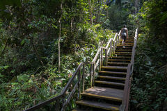 Stair Climbing at Macritchie. Hiker climbing the wooden stairs on the path at Macritchie Reservoir, Singapore Royalty Free Stock Photo