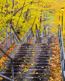 Stair Fall. Stair with fall in Canada Stock Photography