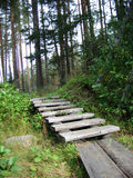 Stair in the forest Stock Photo