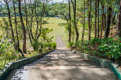 Stair in the Park. View from the top of a stair in a park in Baguio Stock Photography