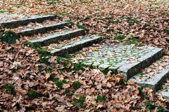 stair path through fall colored leaves stock images
