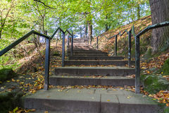 Stair with railing covered by yellow leaves in forest Royalty Free Stock Images
