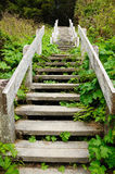 Stair in rain forest Royalty Free Stock Images