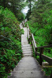 Stair in rain forest Stock Photography