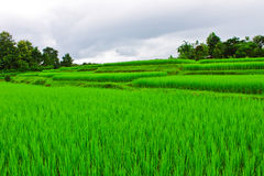 Stair of rice field in countryside of Thailand Stock Photos