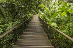 Stair steps in the jungle garden Stock Images