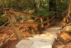 Stair steps in nature forest. A stair case in the woods that leads downward with a railing stock image
