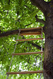 Stair on a tree Royalty Free Stock Photo
