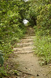 Stair way in forest Royalty Free Stock Photography