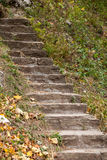 Stair way in forest Stock Photo