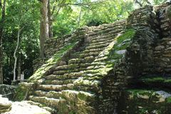 Staircase at an ancient Mayan ruin in Quintana Roo, Mexico. Ruin of an ancient Mayan building with a moss covered staircase in the jungle of Quintana Roo, Mexico Royalty Free Stock Image