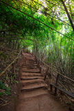 Staircase with bamboo forest. In asia Royalty Free Stock Photos