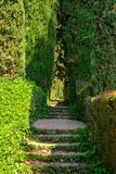 Staircase covered with ivy. In the Santa Clotilde Gardens in Lloret de Mar Stock Photos