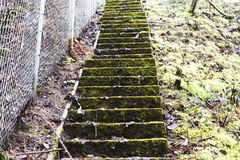 Staircase Covered in Moss Alongside a Chainlink Fence. Concrete stairs covered in green moss. The stairwell looks very old and unused. A chainlink fence runs up Royalty Free Stock Images