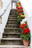 Staircase decorated with colorful flowers Royalty Free Stock Image
