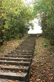 Staircase in the forest. Staircase rise up to the top of the forest the forest Stock Photography