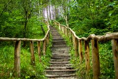 A staircase into the forest of Schoorl. In The Netherlands Stock Photos