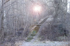 Staircase in forest. Stairs inside of a winter forest leading up a hill stock photography