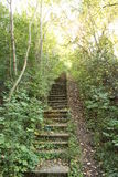 Staircase in forest. Stairs leading up a hill inside a forest stock images