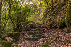 Staircase on a hike in the mountains in Corsica Stock Photography