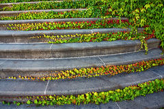 Staircase with ivy Stock Photos